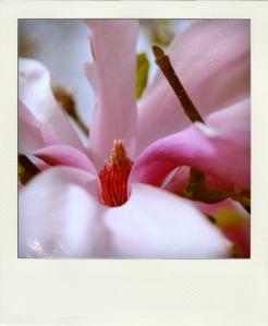 Spring-pola01Use