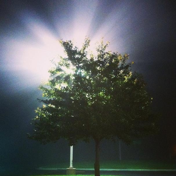 Foggy Morning n Michigan