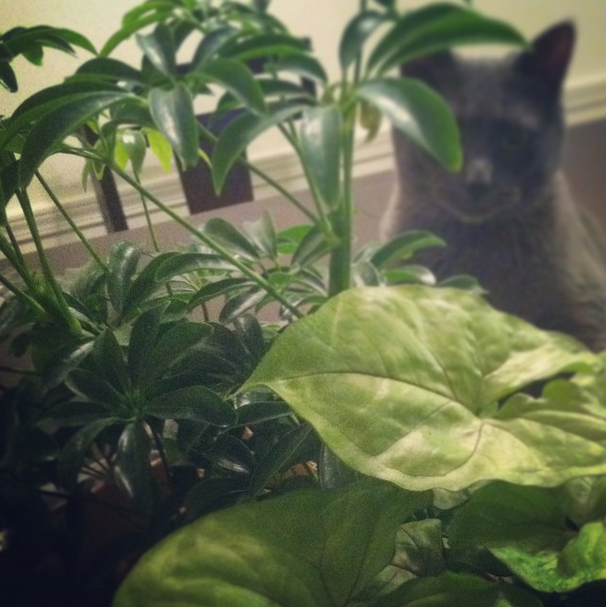 Fargo and the house plants