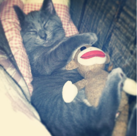 cat-snuggle